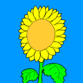 sunflower1 - sydni, 12