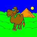 camels are cool - Mady, 13