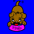 Bingo the Little Dog - sydney, 10