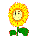 sunflower - Marci, 10
